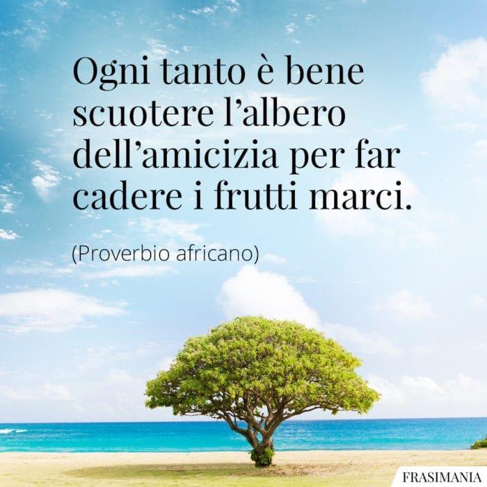 Frasi albero amicizia proverbio