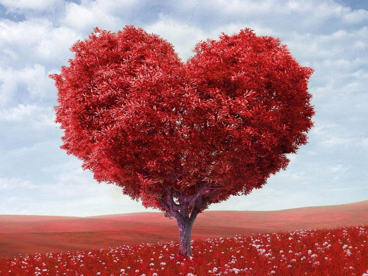 Le 100 Piu Belle Frasi Sull Amore In Inglese Con Traduzione