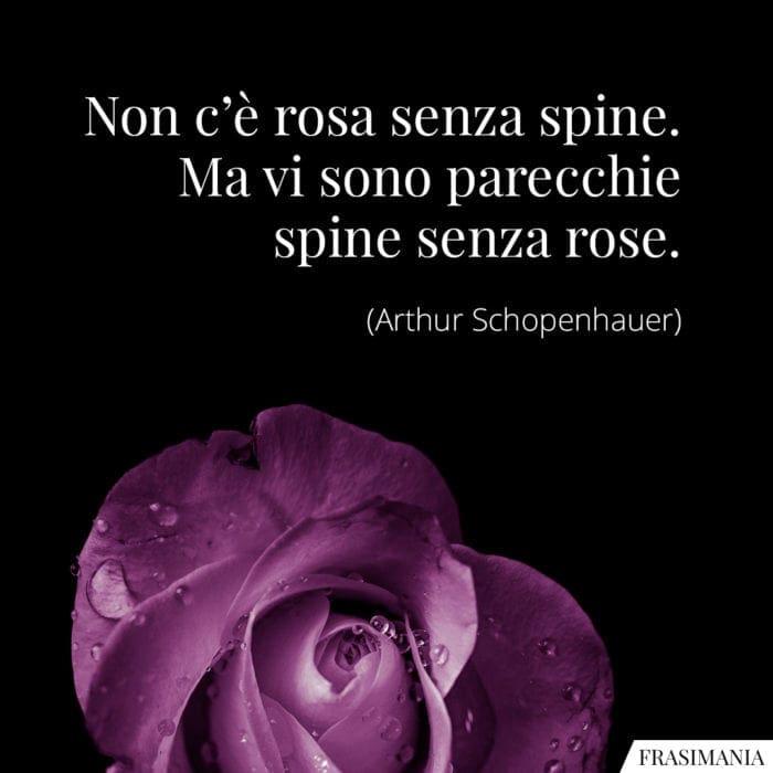 Frasi rosa spine Schopenhauer