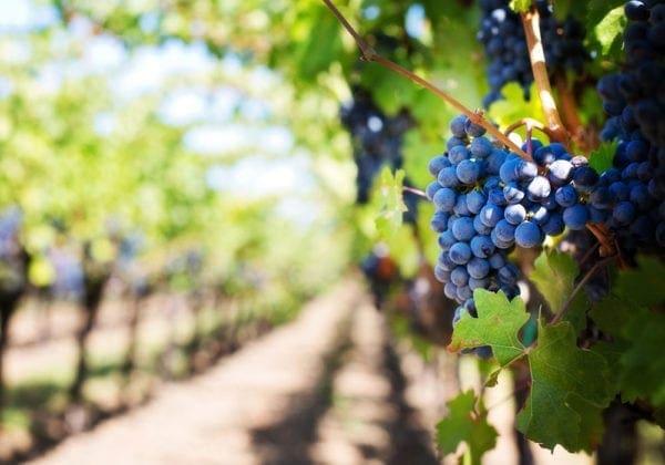 Le 35 più belle frasi in latino sul Vino (con traduzione)