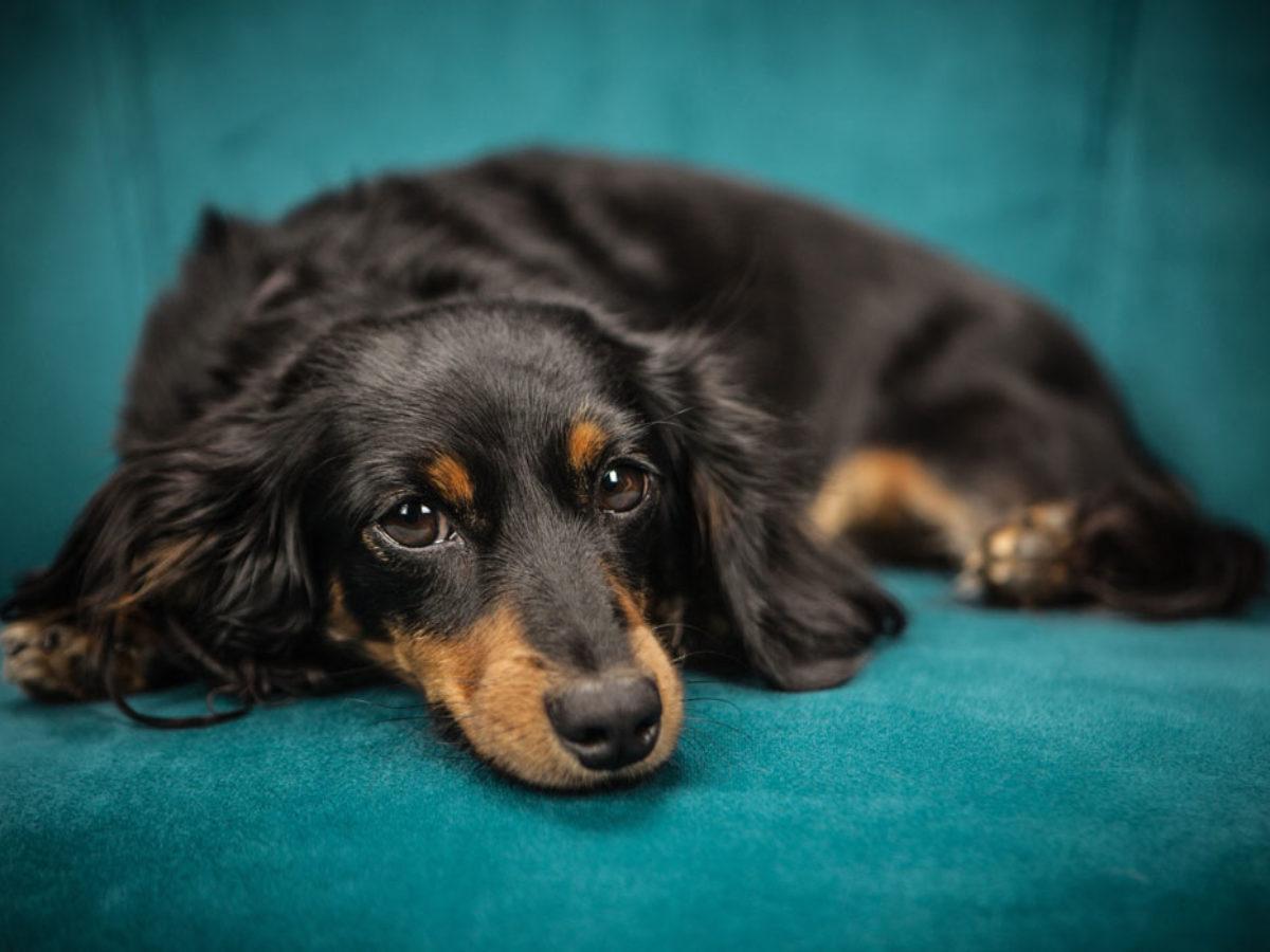 Le 35 Più Belle Frasi Sui Cani In Inglese E Italiano