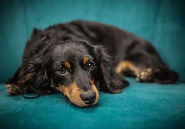 Le 25 più belle frasi sui Cani (in inglese e italiano)
