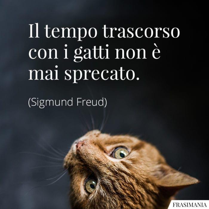 Le 35 Più Belle Frasi Sui Gatti In Inglese E Italiano
