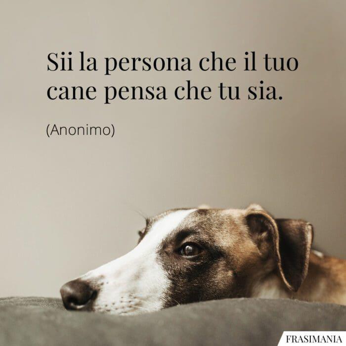 Frasi persona cane pensa
