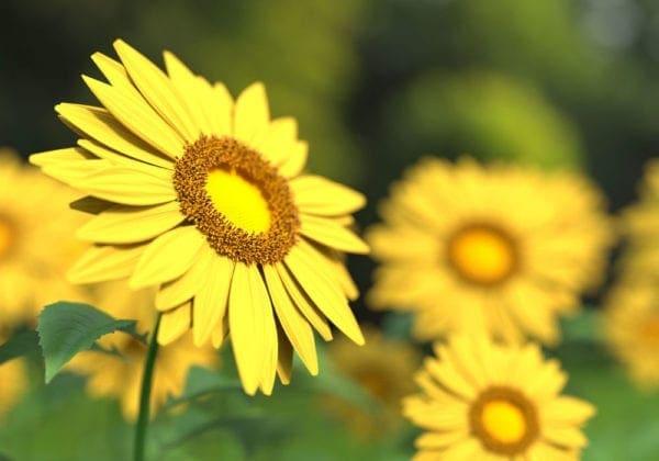 Frasi sulla Resilienza: le 25 più belle e stimolanti