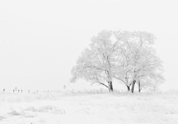 Le 25 più belle frasi sull'Inverno in Inglese (con traduzione)