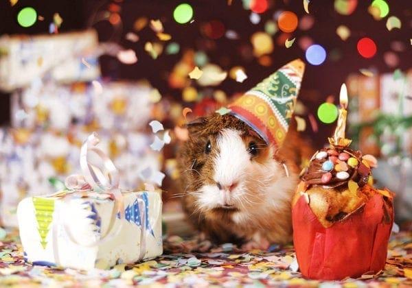 Frasi di Auguri di Buon Compleanno Divertenti: le 50 più belle