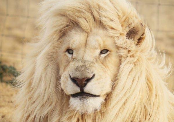 Frasi sui Leader e sulla Leadership: le 25 più belle e famose  (in inglese e italiano)