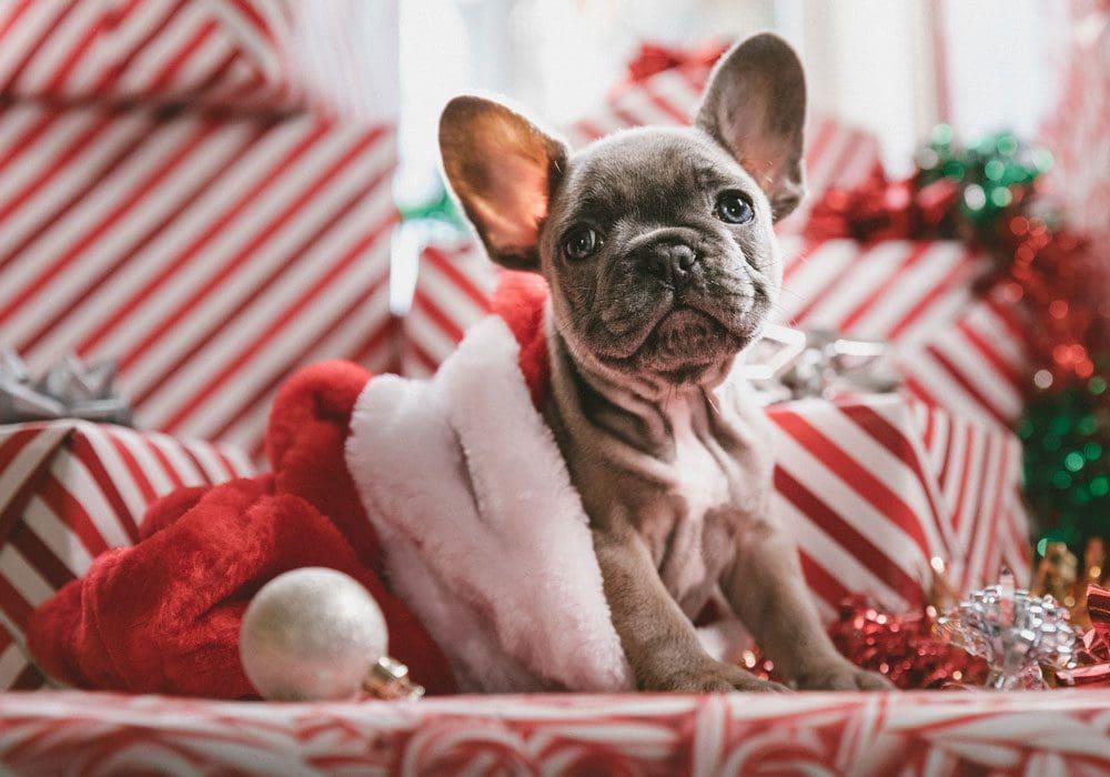 """Frasi per dire """"Buon Natale"""" in tutte le lingue del Mondo"""