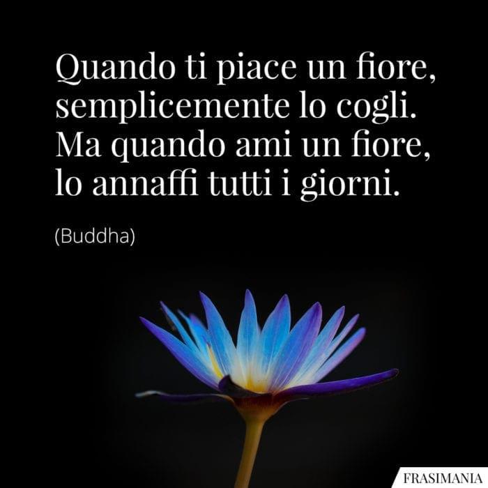 Frasi fiore cogli ami Buddha