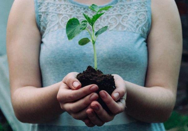 Frasi sull'Ambiente: le 25 più belle (in inglese e italiano)