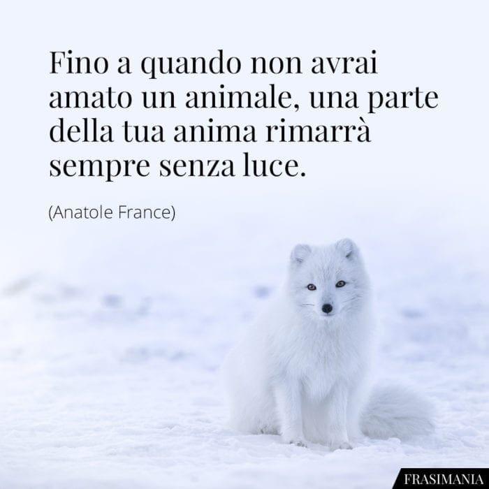Frasi animale anima