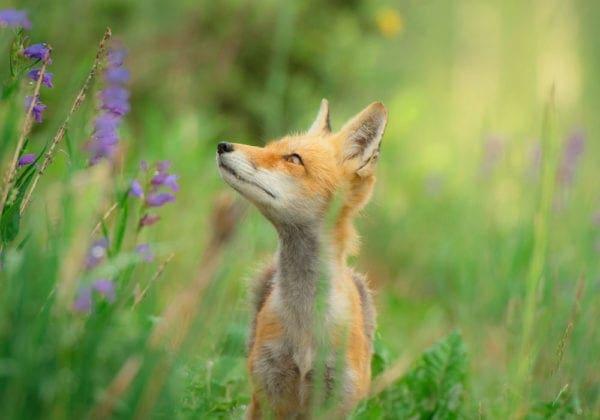 Frasi sugli Animali: le 25 più belle (in inglese e italiano)