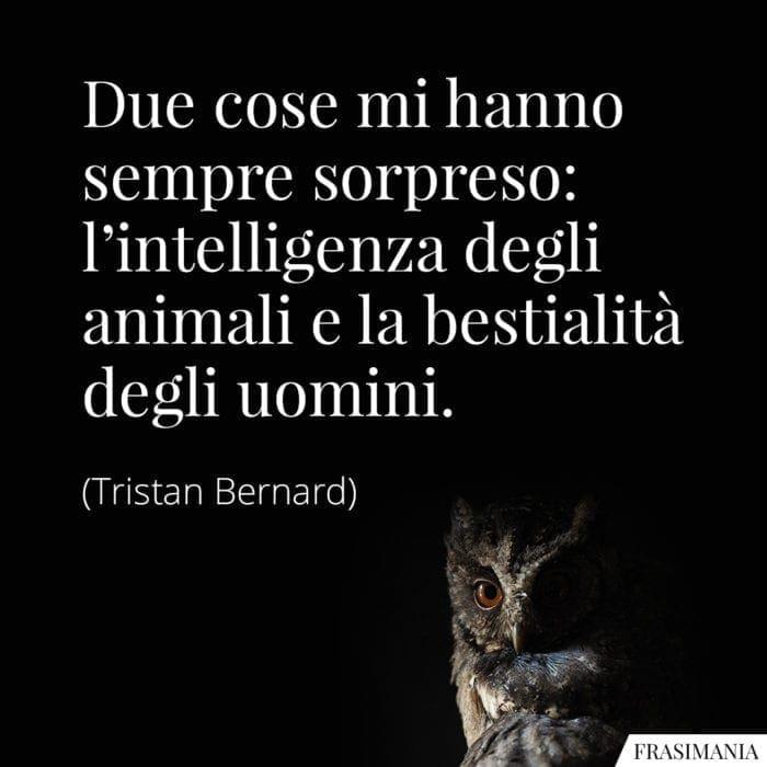 Frasi intelligenza animali uomini Bernard
