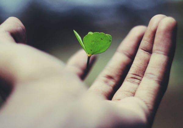 Frasi sull'Altruismo e sull'Aiutare gli Altri