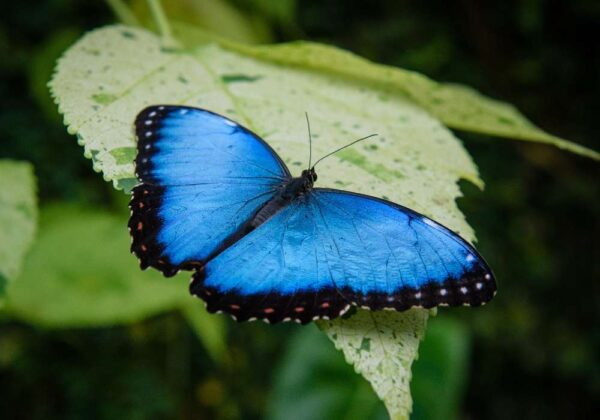 Frasi sulle Farfalle
