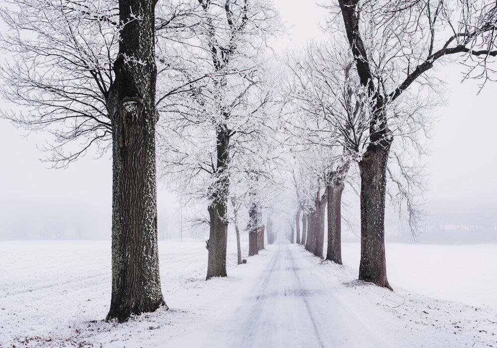 Poesie sulla Neve