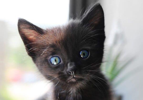 Nomi per Gatti Maschi